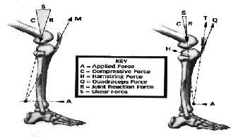 Figure 2 - Shear forces in kinetic exercises